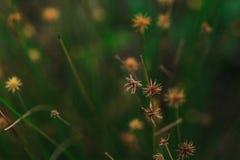 El polen de la hierba comienza a secarse imágenes de archivo libres de regalías