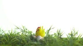 El pollo del juguete se sienta en los huevos de codornices en la hierba, días de fiesta de Pascua