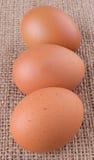 El pollo Eggs IX fotos de archivo libres de regalías