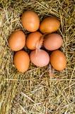 El pollo fresco eggs con la jerarquía, pila de A de huevos marrones en una jerarquía Foto de archivo libre de regalías
