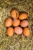 El pollo fresco eggs con la jerarquía, pila de A de huevos marrones en una jerarquía Imagen de archivo