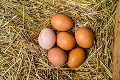 El pollo fresco eggs con la jerarquía, pila de A de huevos marrones en una jerarquía Fotografía de archivo libre de regalías