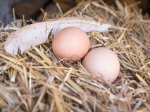 El pollo marrón del primer eggs en una cama de la paja Imagenes de archivo
