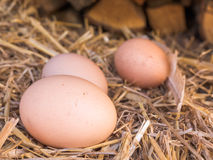 El pollo marrón del primer eggs en una cama de la paja Imagen de archivo
