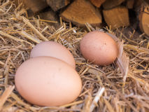 El pollo marrón del primer eggs en una cama de la paja Fotos de archivo