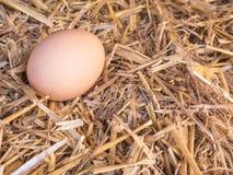 El pollo marrón del primer eggs en una cama de la paja Fotografía de archivo