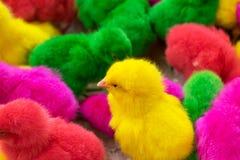 El pollo, pollo lleno del color en la granja, producción para muchos colorea c Imágenes de archivo libres de regalías
