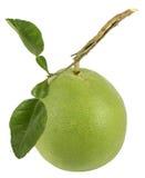 El pomelo con el tallo y hojas en el aislante blanco del fondo Imagen de archivo libre de regalías