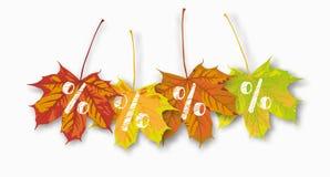 El 4 por ciento de las hojas de arce Fotografía de archivo libre de regalías