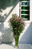 El pote de asteres alpinos florecientes florece en la tabla de madera blanca fotografía de archivo
