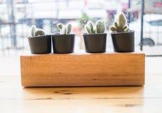 El pote de la planta del cactus adornó la tabla de madera Imagenes de archivo