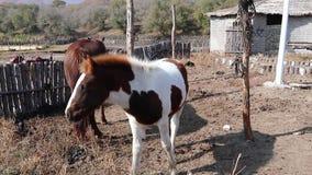 El potro precioso del caballo