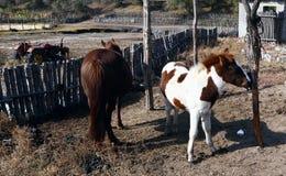 El potro precioso del caballo foto de archivo
