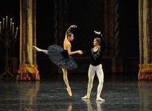 El príncipe cayó en amor con el lago adulto swan del ceremonia-ballet del príncipe negro del cisne- Fotos de archivo libres de regalías
