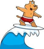 El practicar surf del gato Imagen de archivo libre de regalías