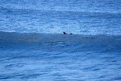 El practicar surf en el mar imagenes de archivo