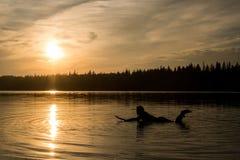 El practicar surf en Maine en la puesta del sol fotografía de archivo libre de regalías
