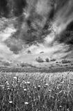 El prado Imagen de archivo