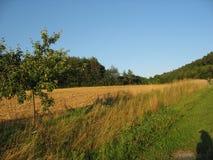 El prado Imagen de archivo libre de regalías