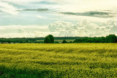El prado amarillo en un fondo del alivio se nubla Imagen de archivo libre de regalías