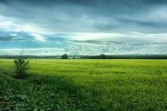 El prado amarillo en un fondo del alivio se nubla Fotos de archivo libres de regalías