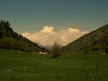 El prado con la picea y la hierba segada con las flores, en el fondo allí son algunas casas y colinas Naturaleza intacta verde La foto de archivo