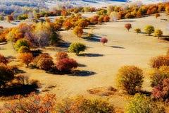 El prado de oro del otoño Fotos de archivo libres de regalías