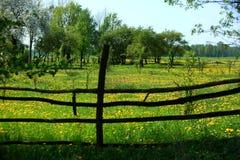 El prado derramado con el diente de león del amarillo de la primavera florece, es decir popular diciendo la leche Fotografía de archivo