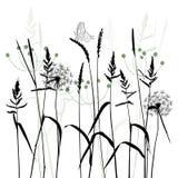 El prado en el verano, vector de la planta