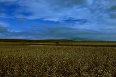 El prado en Vojvodina Imagenes de archivo