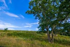El prado grande encendido pasa por alto el parque nacional de Shenandoah de la impulsión, Virginia Fotografía de archivo libre de regalías