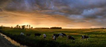 El prado holandés Imagen de archivo