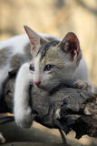 El preguntarse lindo del gatito Fotografía de archivo libre de regalías