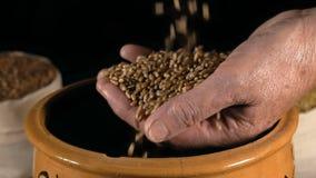 El primer, cámara lenta, granos del trigo cae en la mano mayor del ` s de la mujer en el fondo negro almacen de video