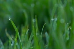 El primer cae del rocío en hierba verde fresca joven foto de archivo libre de regalías