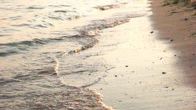El primer de aguas afila en la playa de la tarde almacen de video