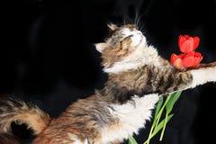 El primer de un gato el dormir, un gato ha encontrado su hogar y es animales felices del rescate de la calle imágenes de archivo libres de regalías