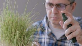 El primer de un hombre en los ejemplos del laboratorio los brotes de secar la hierba amarilleada y salpica el agua en la planta metrajes