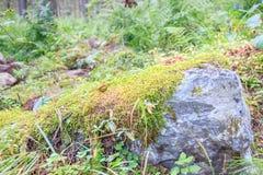 El primer de un musgo cubrió la piedra Fotos de archivo