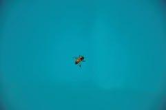 El primer de una abeja encima del agua, cerca de Monte Alegre hace Sul Foto de archivo libre de regalías