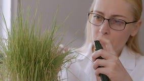El primer de una mujer en los ejemplos del laboratorio los brotes de secar la hierba amarilleada y salpica el agua en la planta almacen de video