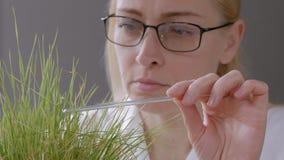 El primer de una mujer en vidrios en el laboratorio examina los brotes de secar la hierba amarilleada, tocando una barra de crist metrajes