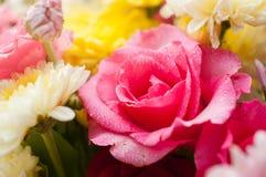 El primer del color de rosa se levantó Imagenes de archivo