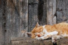 El primer del gato de Brown se relaja debajo del sol fotografía de archivo libre de regalías
