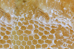 El primer del panal y tiene abeja de la miel Imágenes de archivo libres de regalías