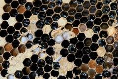 El primer del panal y tiene abeja de la miel Foto de archivo