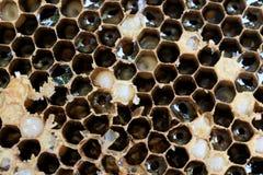 El primer del panal y tiene abeja de la miel Imagen de archivo libre de regalías