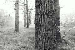 El primer del tronco de árbol de banyan arraiga con las tallas imagen de archivo libre de regalías