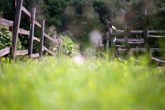 El primer del verano florece en la granja rural como sensación del bokeh Fotos de archivo libres de regalías