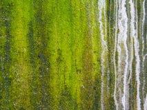 El primer del verde áspero texturizó el fondo y el boke Imagenes de archivo